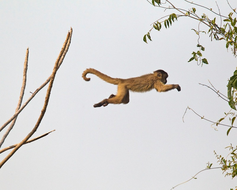 macaco4