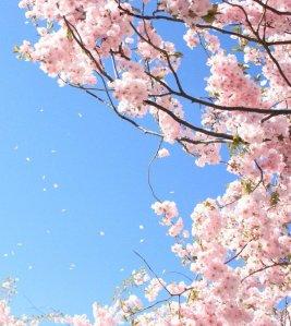 sakura_tree_i_by_shcy-d5diuu2